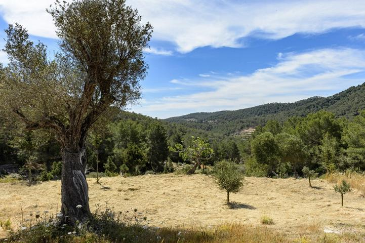 Tradional charming finca set on a giant agricultural plot close to Santa Eularia