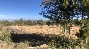 Nice 22.000m2 land between San Agustin and San Antonio