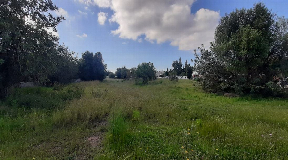 Superb urban land for sale with 2000m2 in Jesus with privacy